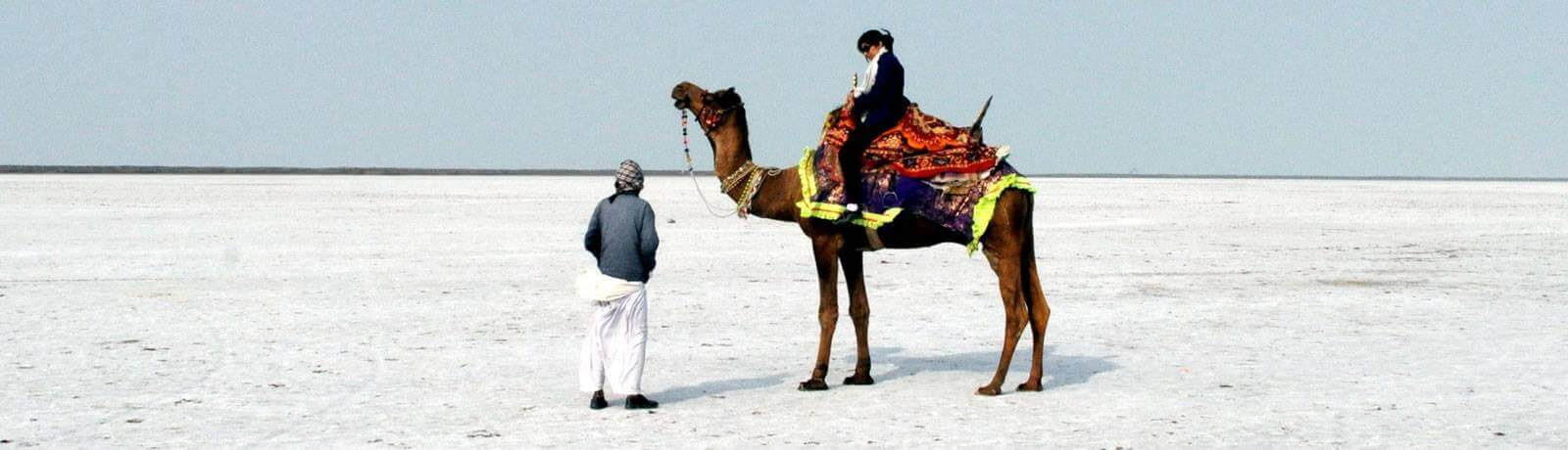 Camel Riding in Kutch Rann